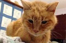 18歳の猫