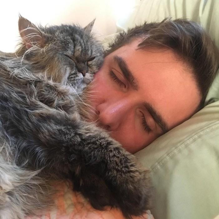 顔で寝る猫