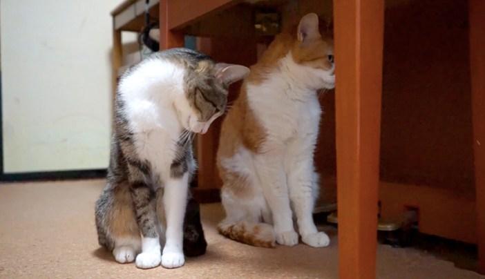 チラ見る猫