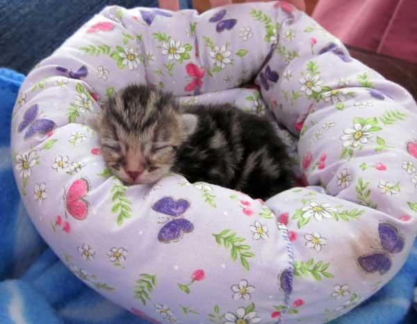 ベッドと子猫