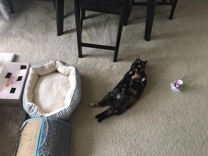 ベッドで寝ない猫