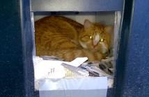 猫の家と猫