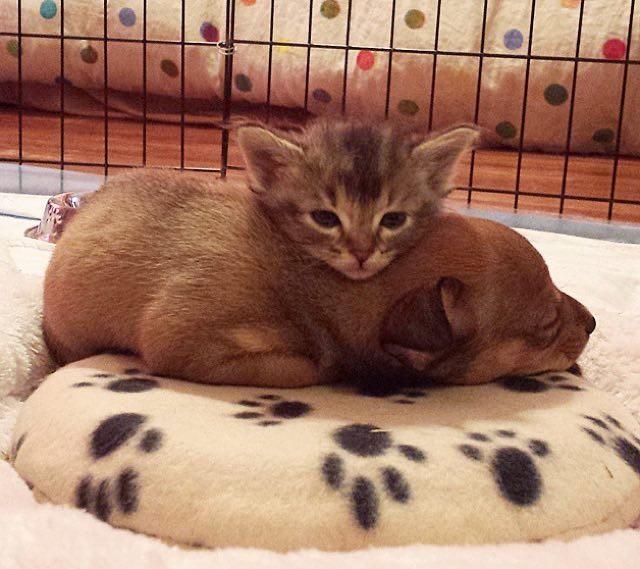 仲良しな子猫と子犬