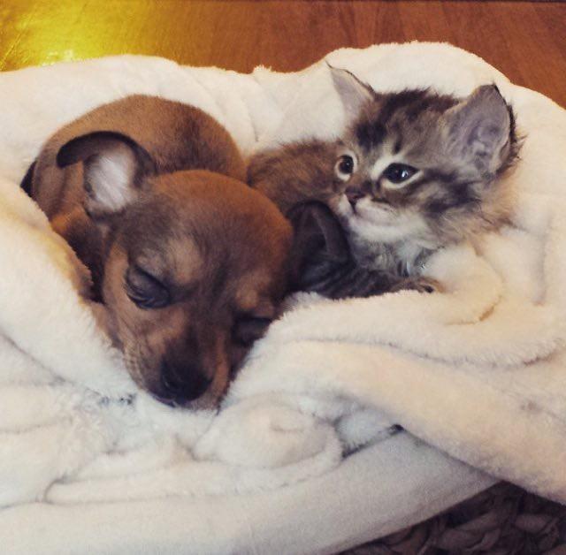 幸せそうな子猫と子犬