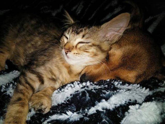 一緒に眠る子猫と子犬