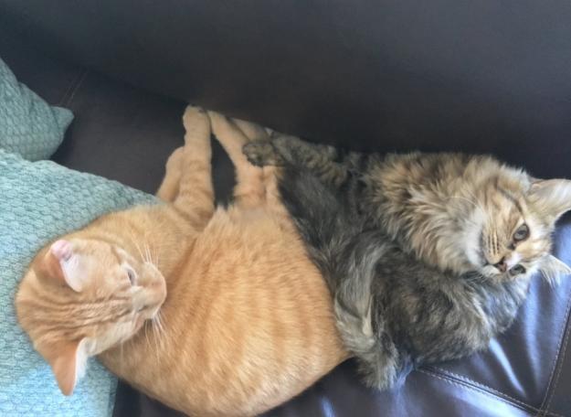 幸せいっぱいの猫達