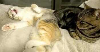 寝言を言う猫