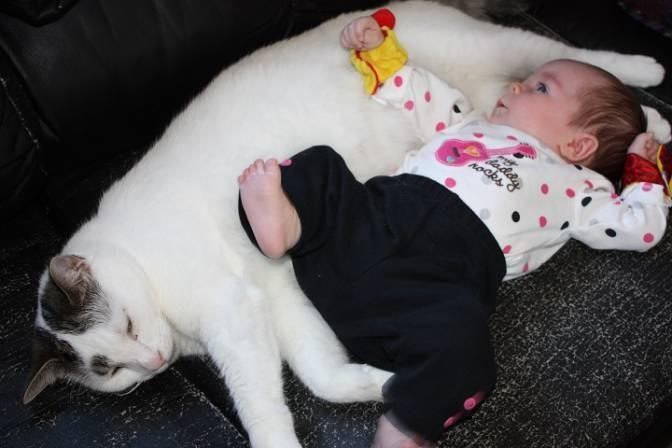 猫と幼い頃の少女