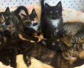 9匹の子猫を生かすため、自分のご飯を与え続けた野良猫。倒れていたところを保護され、元気を取り戻すと… (7枚)