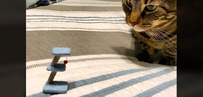 猫と小さいキャットタワー