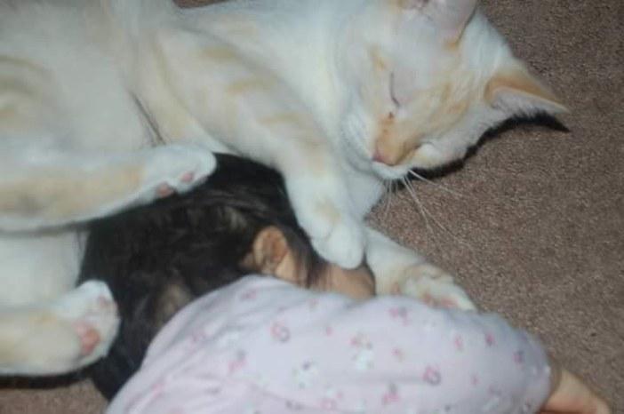 幸せそうな赤ちゃんと猫