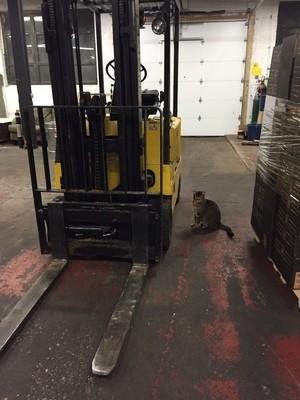 工場の中の猫
