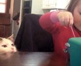 ある日、家を訪ねて来た野良猫。いつの間にか2人の子供と仲良くなって、すっかり家族の一員に! (8枚)