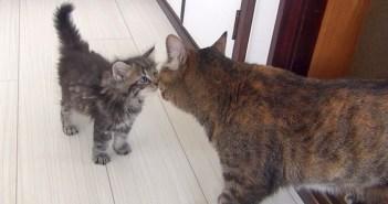 猫と子猫の初対面