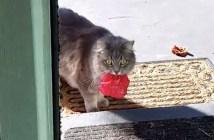 花を持って来た猫