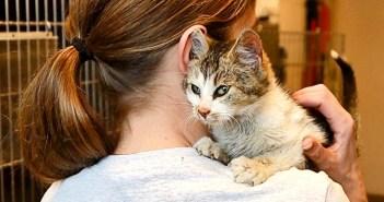 寒さから助け出された猫
