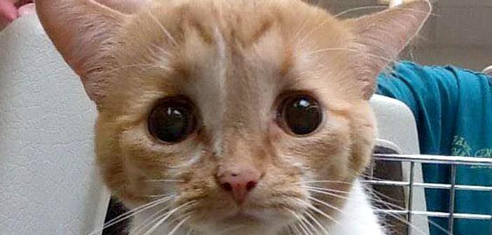 病気を抱えた子猫