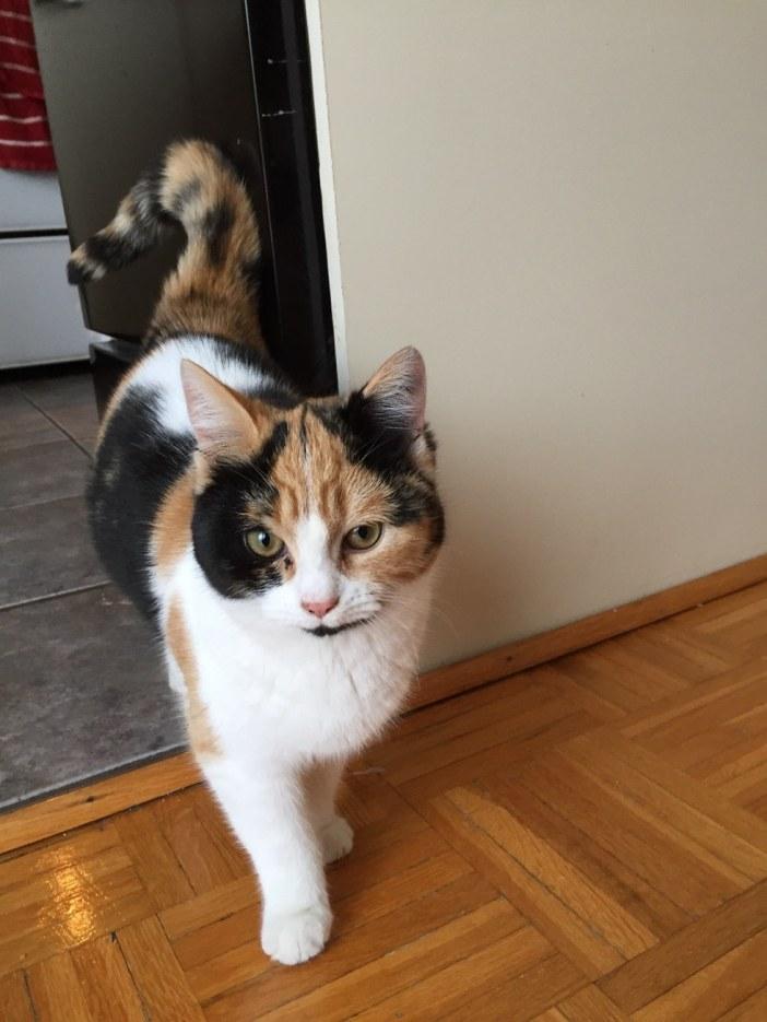 家の中に来た猫