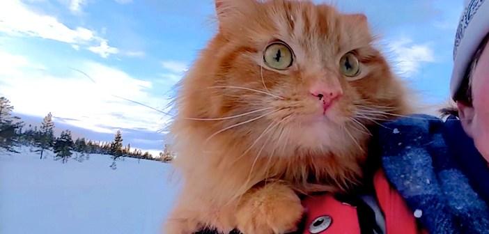 「どこまでもついていく!」大好きな飼い主さんと一緒に、大冒険を楽しむ猫にビックリ! (9枚)
