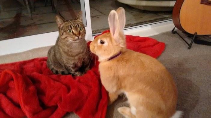 見つめる猫とウサギ