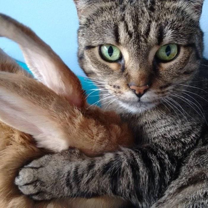 ウサギを抱く猫