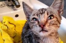 雨の中保護された猫