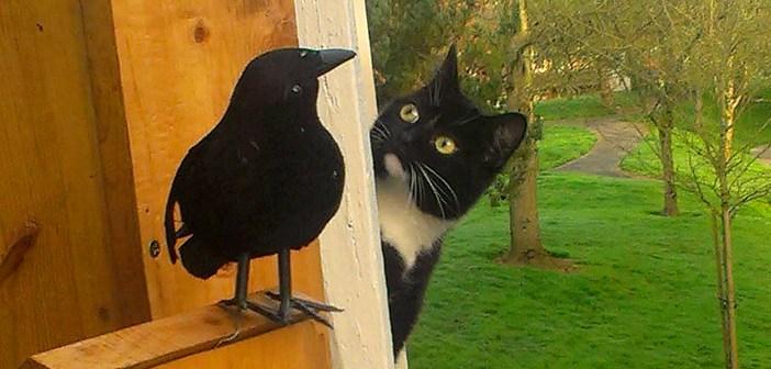カラスを覗く猫