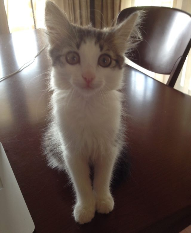 見上げる猫