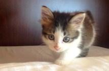 しっぽを怪我した子猫