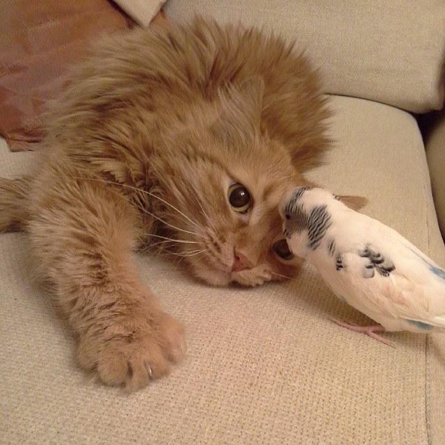 猫と仲良しな鳥