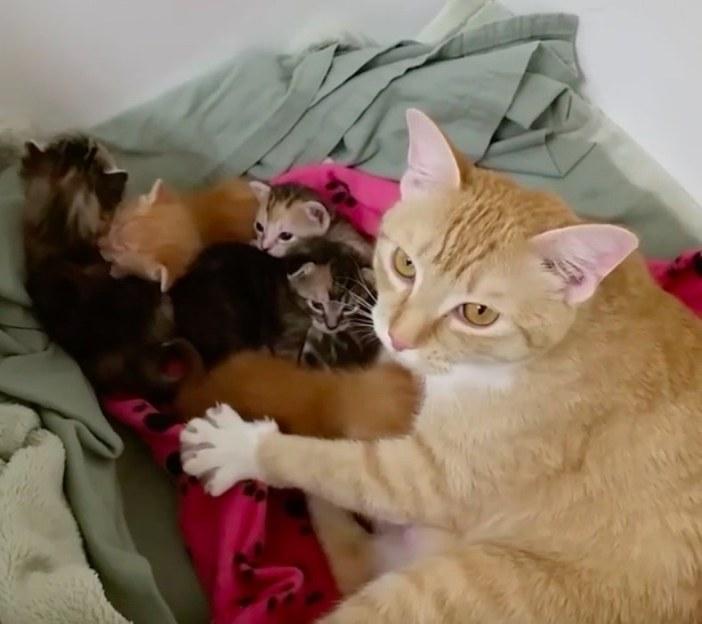 子猫たちと母猫