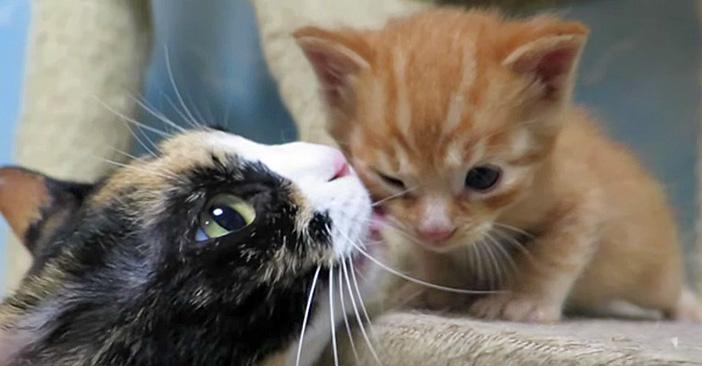 ペロペロされる子猫