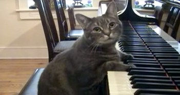 ピアノを弾く猫