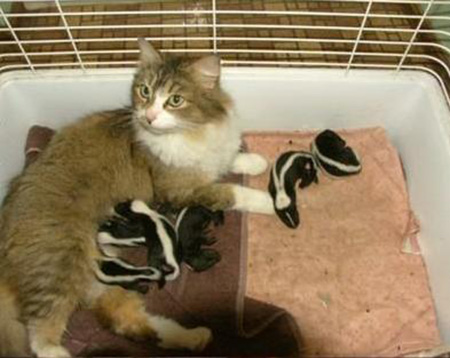 スカンクを育てる猫