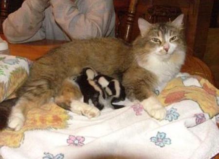 スカンクと猫