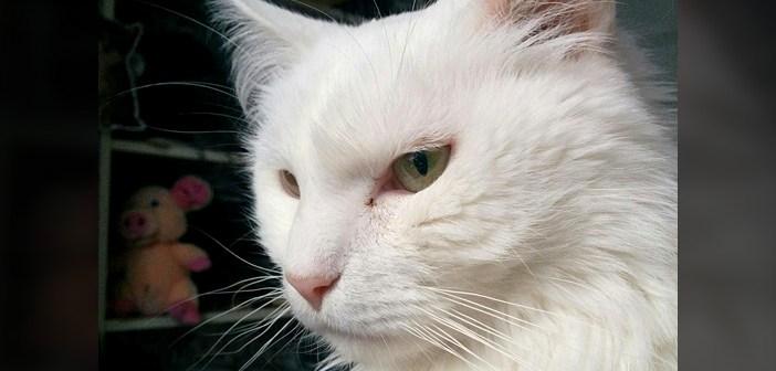 『あまりにも攻撃的』だったため、保健所に入れられてしまった猫。優しい女性に出会うと… 驚きの変化が! (7枚)