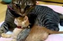 兄猫にギュッとされる子猫