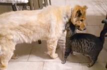 盲目の犬と猫