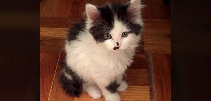 寒さの中、車の下で凍りついていた子猫。保護から1年後の幸せそうな姿にホッとする (8枚)