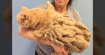 全身が毛玉に覆われていた13歳の老猫。大量の毛から解放されたのがとっても嬉しくて… (4枚)