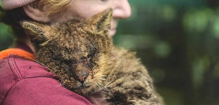 抱きしめられた猫