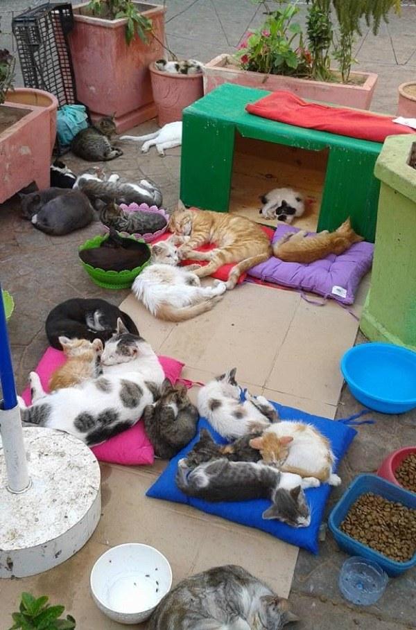 保護された猫達