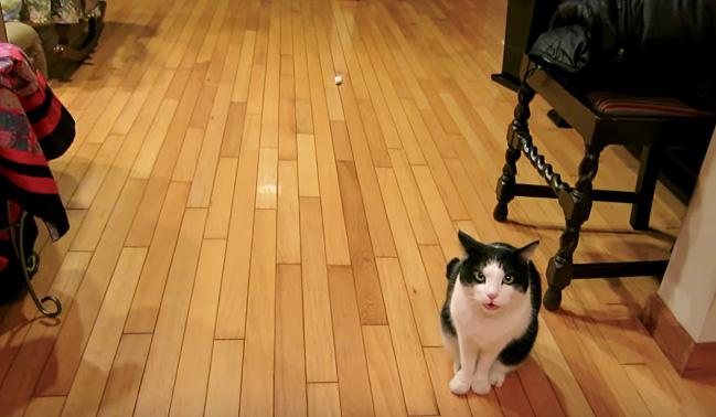 誘いに来た猫