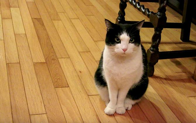 不満そうな猫