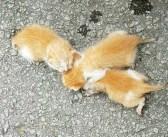 """車に貼られていた手書きの """"張り紙""""。そこに書かれたメッセージが、3匹の子猫の命を救う! (4枚)"""