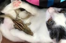 猫とリスの赤ちゃん