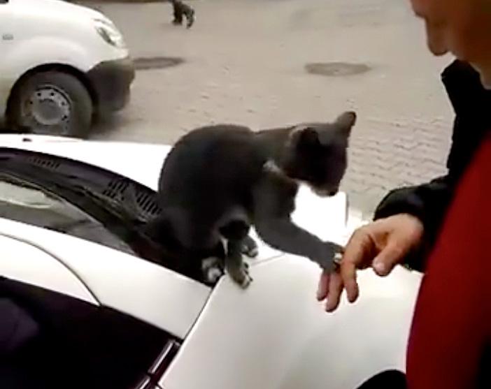 手を掴む猫