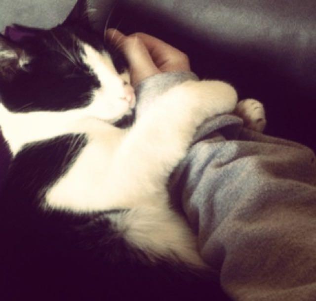 手にしがみつく猫