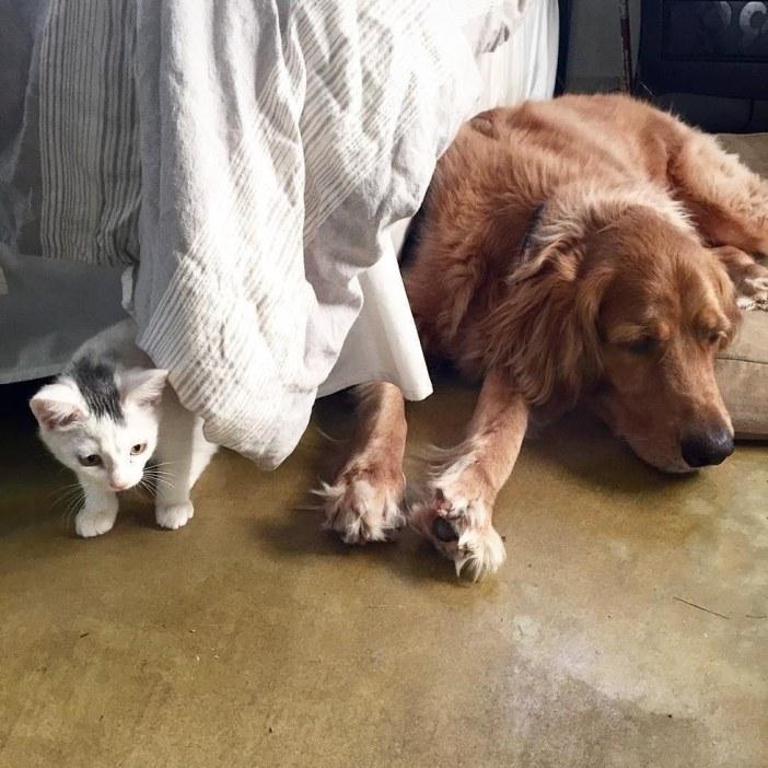 カーテン越しの犬と子猫