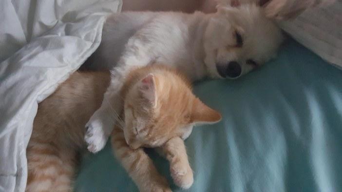 とっても仲良しな子猫と犬